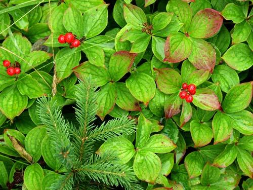 berries7242562